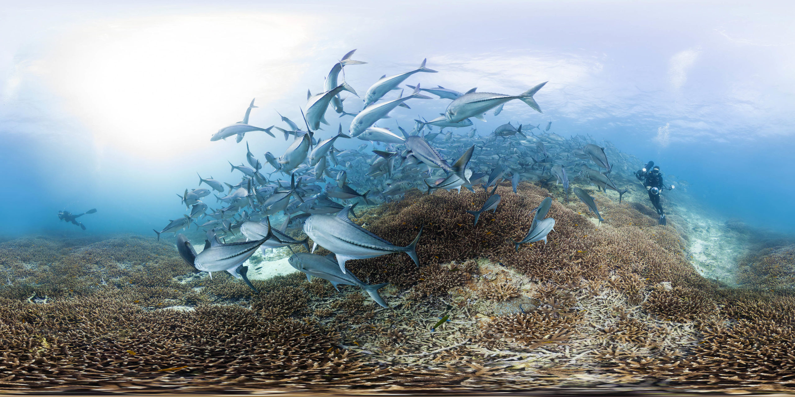 A still from Chasing Coral: The VR Experience by Jeff Orlowski, an official selection of the New Frontier VR Experiences program at the 2017 Sundance Film Festival. © 2016 Sundance Institute.