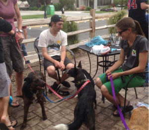 dog-friendly patios