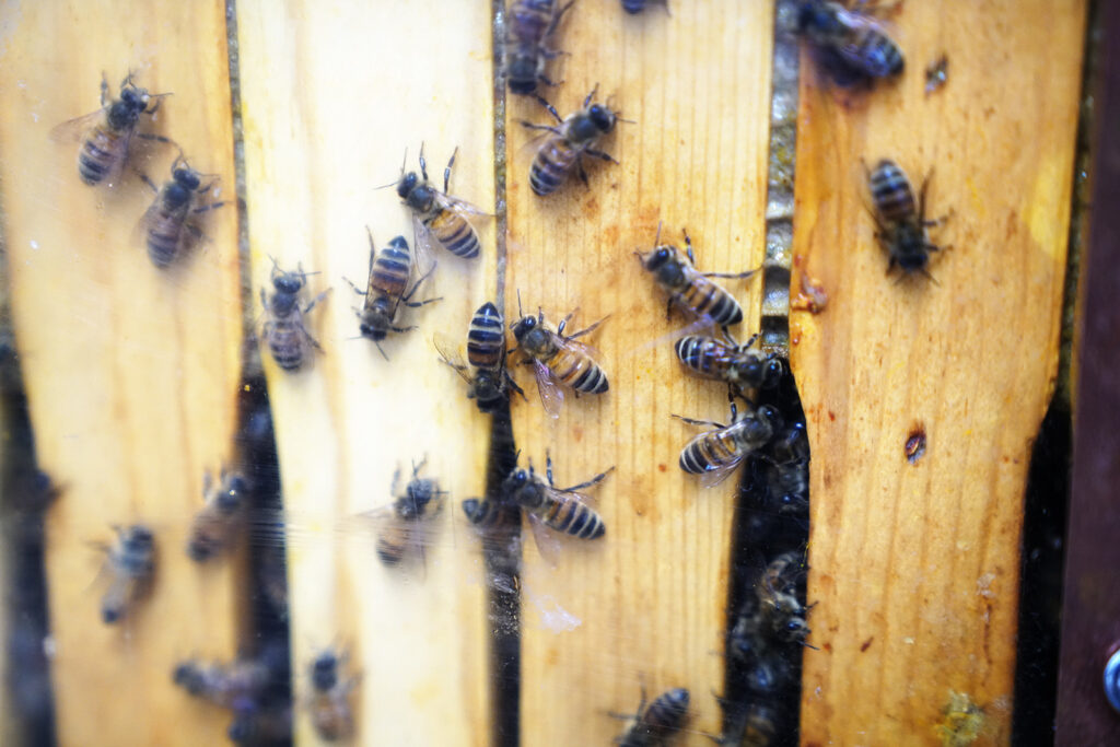 honey bees for sale to begin beekeeping
